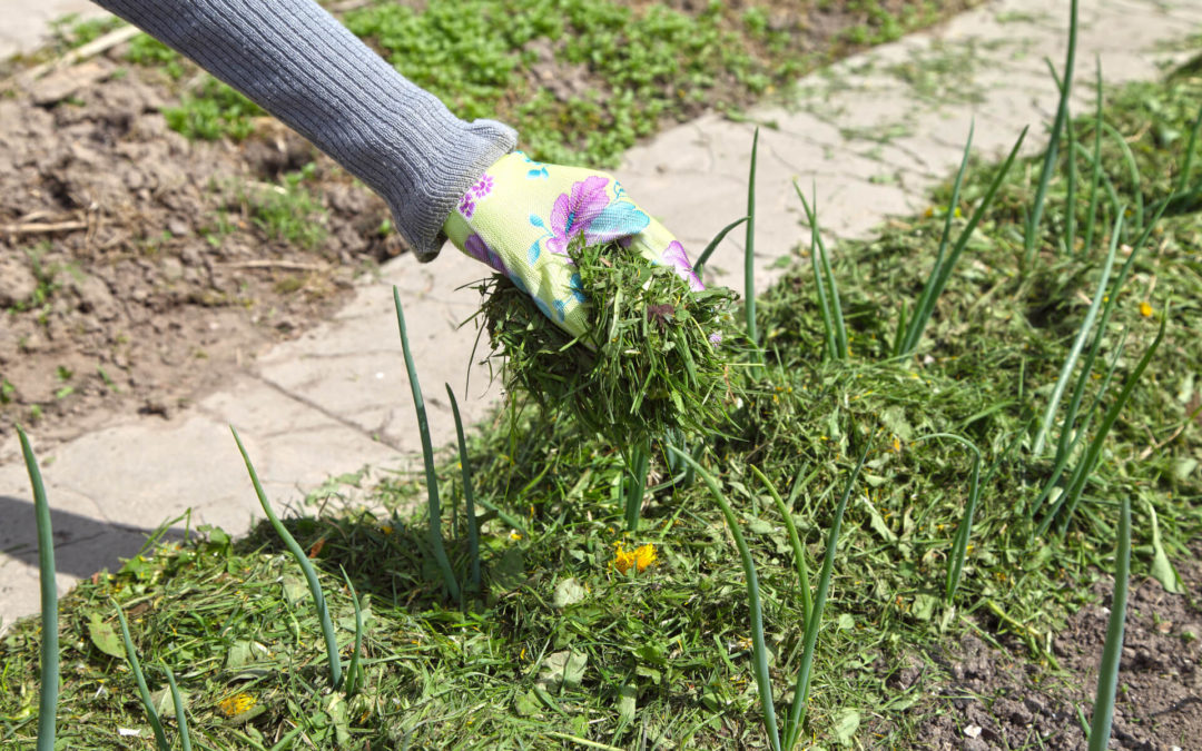What Are the Benefits of Mulching Your Grass Clippings